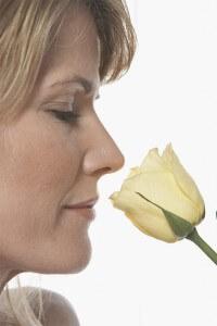wonderful smelling rose