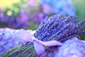 Lavender Essential Oil Scented Products