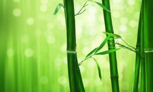 The Scent Of Green Bamboo
