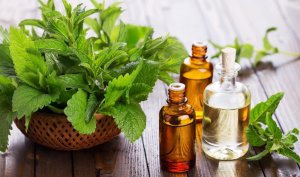 Patchouli Essential Oil Fragrance