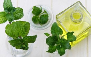 Mint Essential Oil Alpha Aromatics