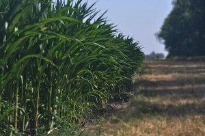 ¿Exactamente qué es el etanol?