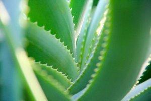 Aloe Vera After Sun Gel Fragrances