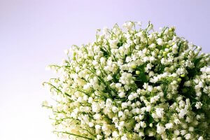 Lily Of The Valley In Scented Products