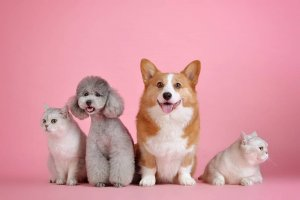 Fragrances And Typical Pet Care Products